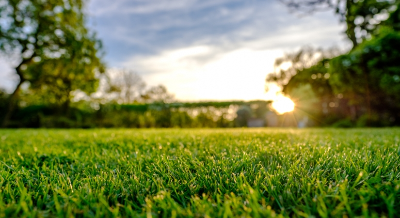 Lawn Care Services - Rockford IL